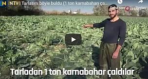 Hırsızlar Çiftçinin Tarlasından 1 Ton Karnabahar Çaldılar